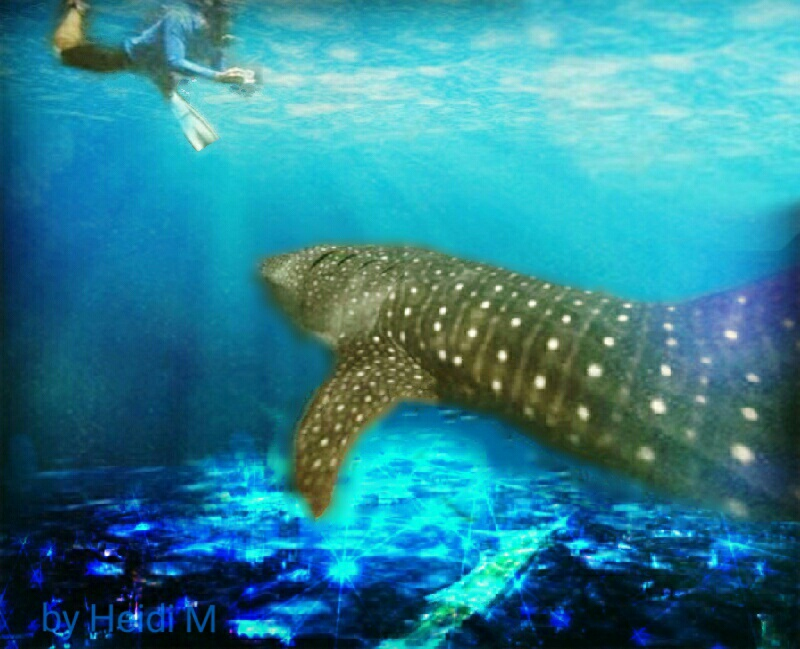 An electrical grid on the sea floor, under a shark and diver.