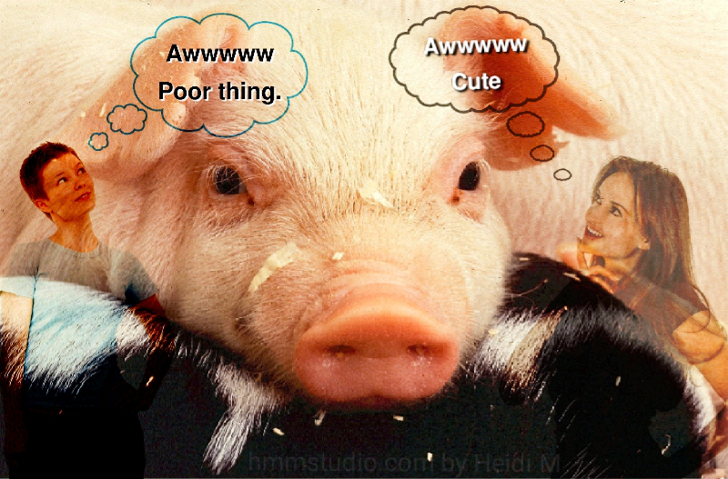 A pig with a woman thinking Awww you poor thing, and another woman thinking Awww cute.